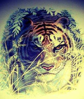 Shere Khan Tiger